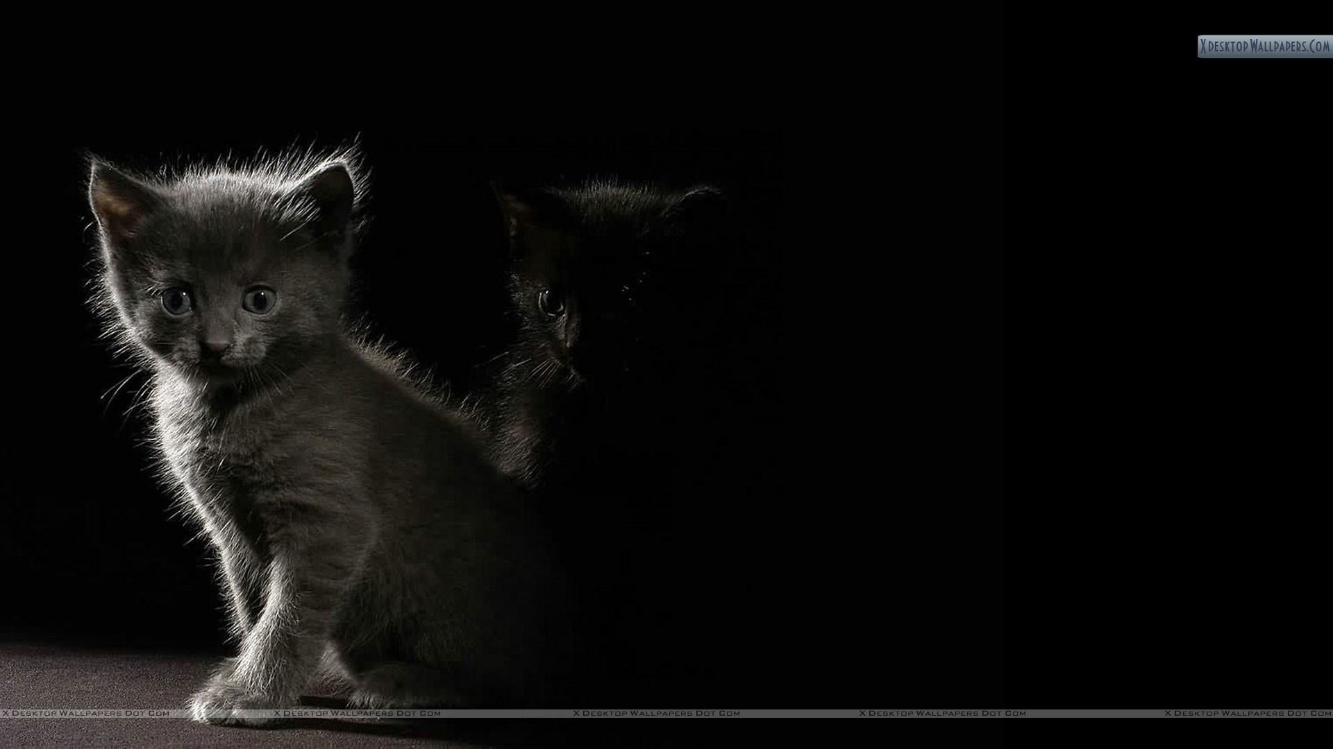 Cat In Dark Shadow Wallpaper