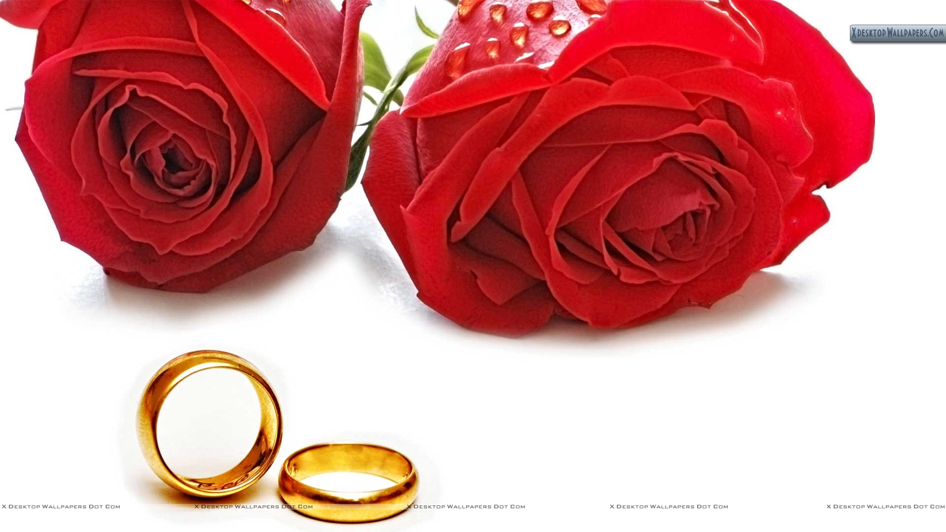 You Are Viewing Wallpaper Titled Red Roses And Golden Wedding