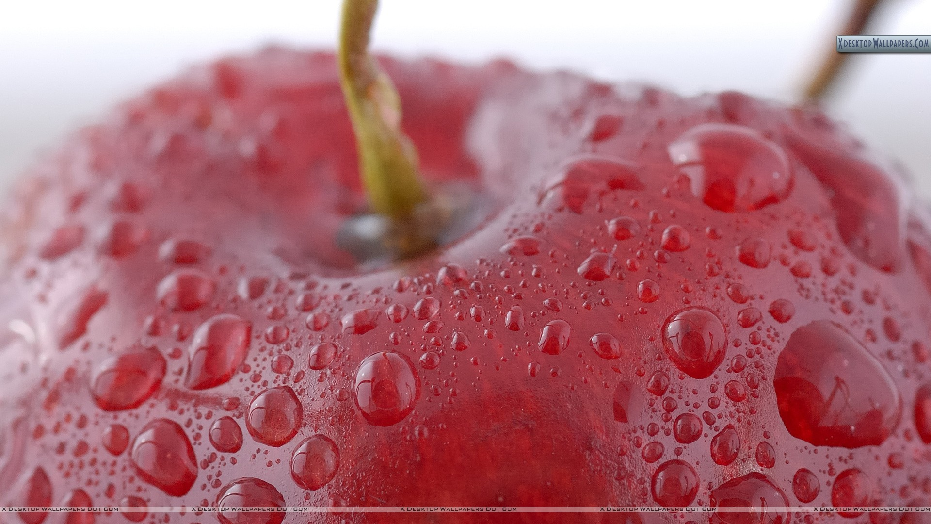 You Are Viewing Wallpaper Titled Apple Closeup With Water