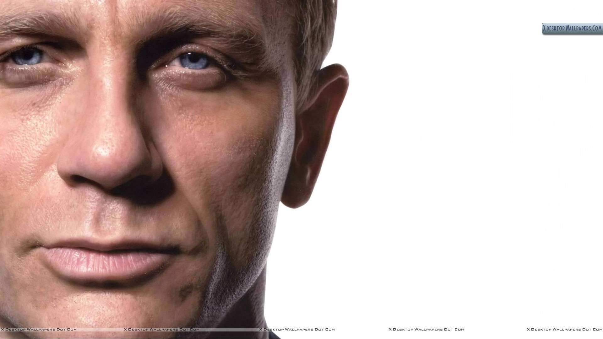 You Are Viewing Wallpaper Titled Daniel Craig Half Face