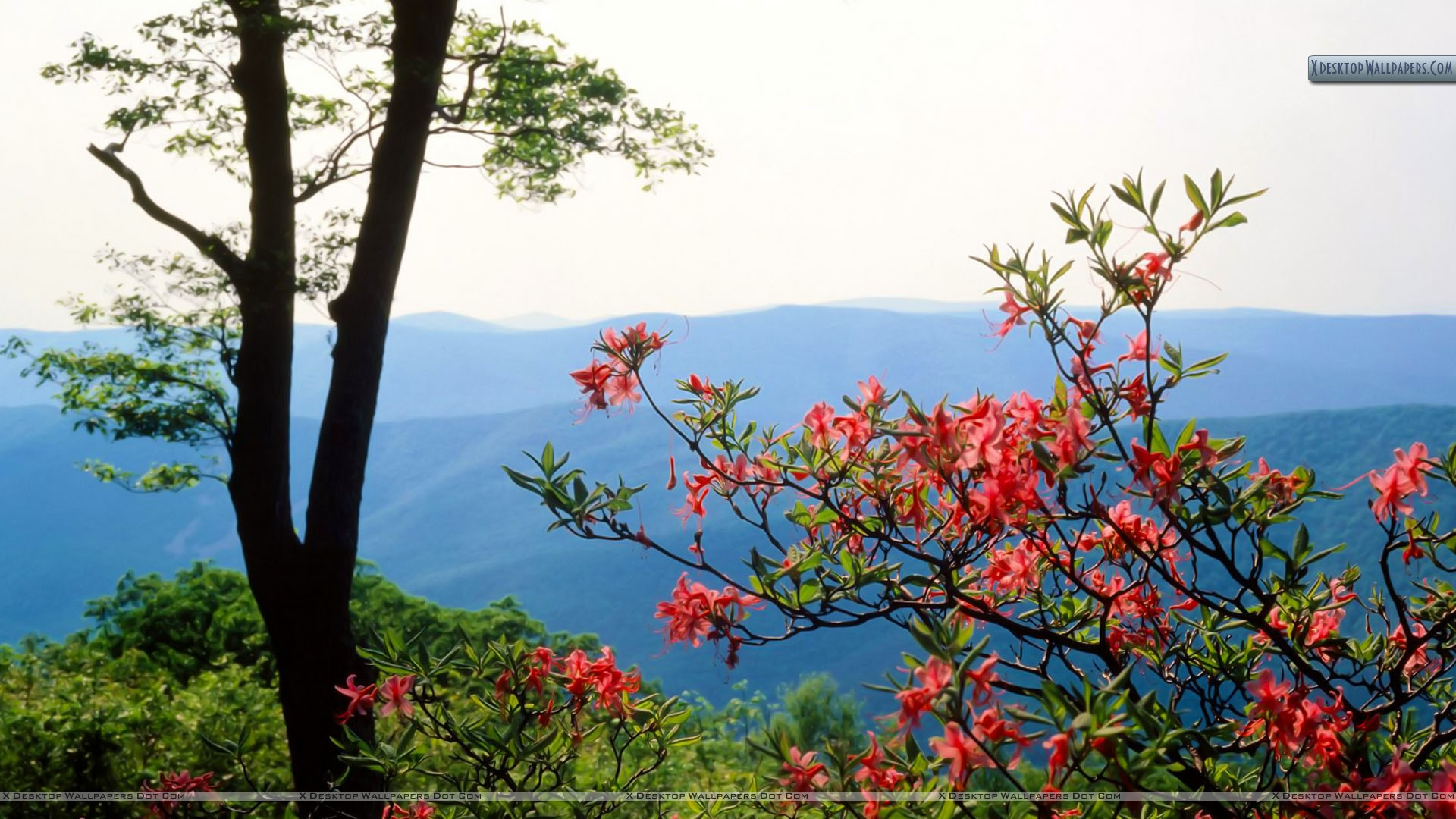 you are viewing wallpaper titled blue ridge mountains north carolina