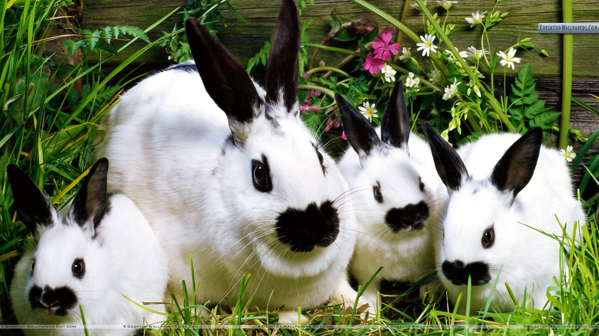 Bunch o bunnies wallpaper you are viewing wallpaper voltagebd Image collections