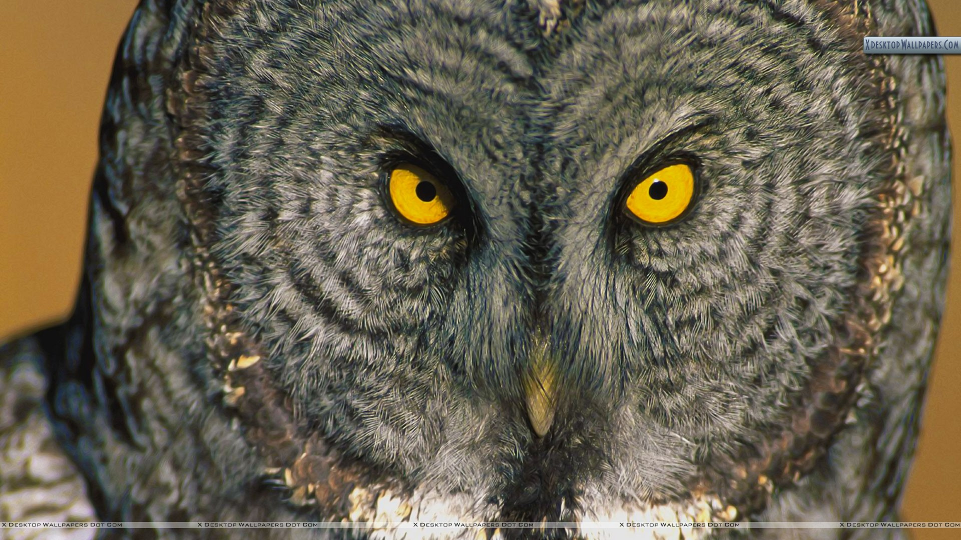 Great Grey Owl wallpaper - 1188043
