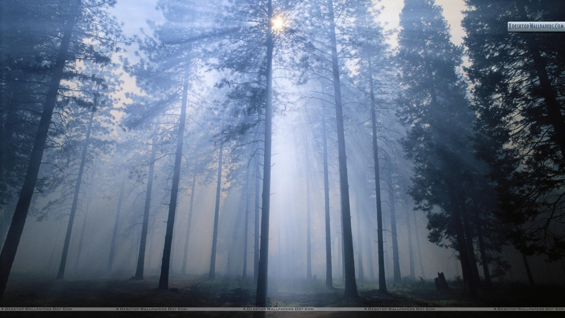 Sun filtering through smoke from a fire in the forest wallpaper you are viewing wallpaper voltagebd Gallery