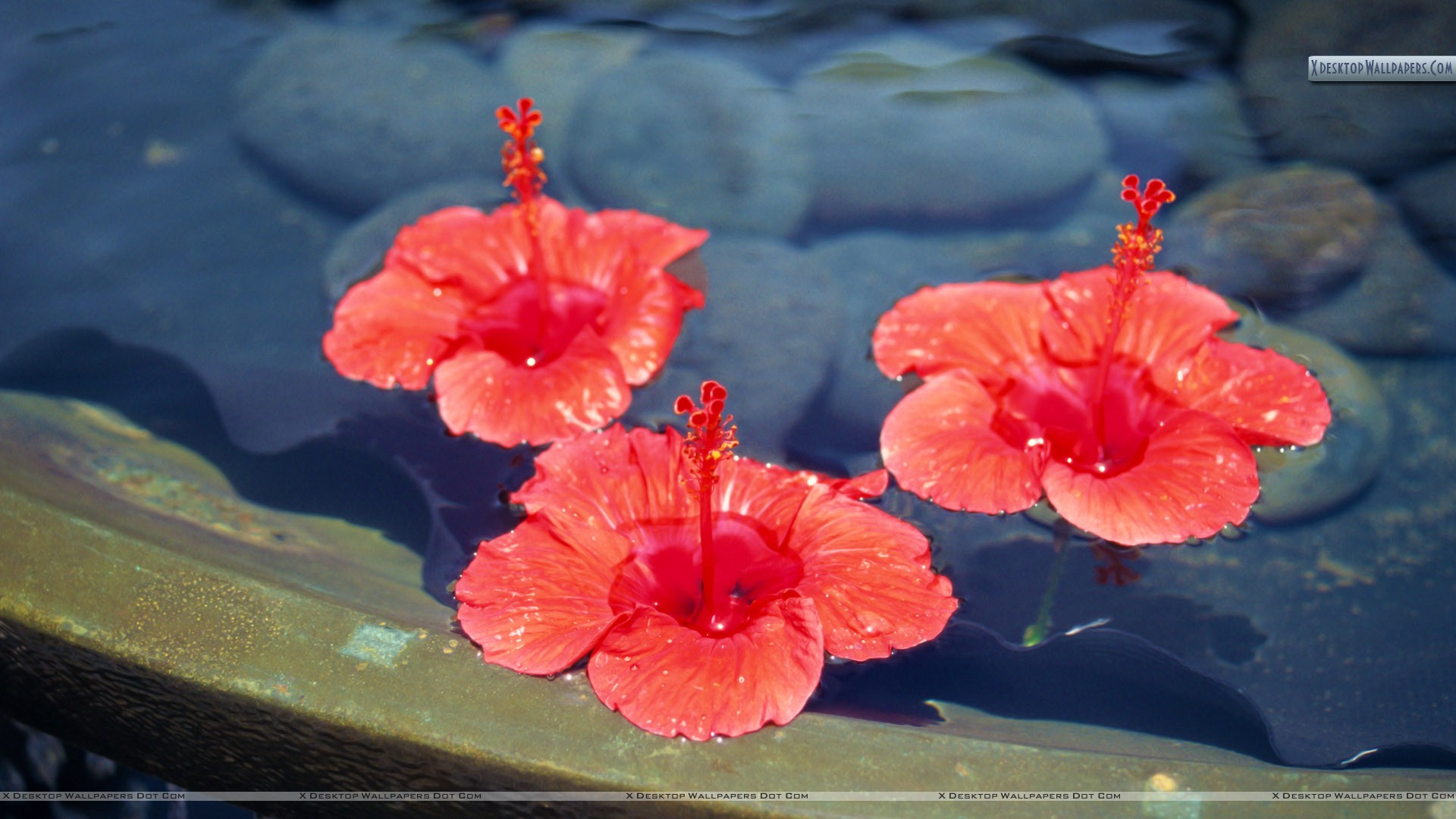 Three orange flowers floating on water wallpaper for Floating flowers in water