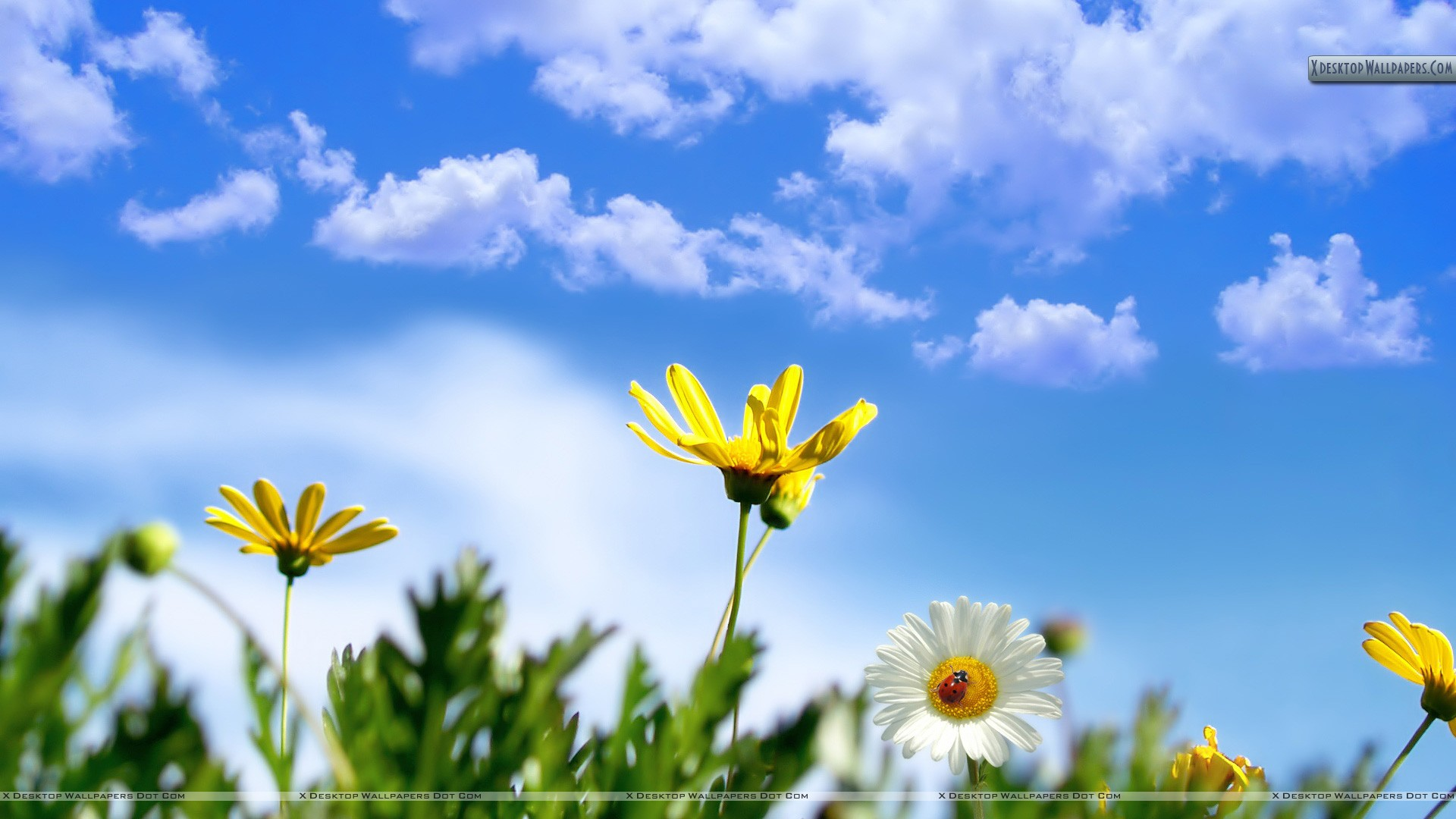 White Yellow Flower In Spring Time Wallpaper
