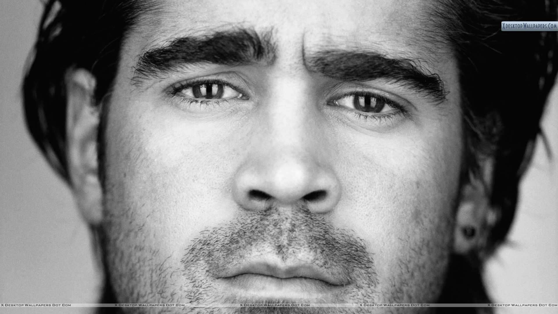 You are viewing wallpaper titled colin farrell black white face