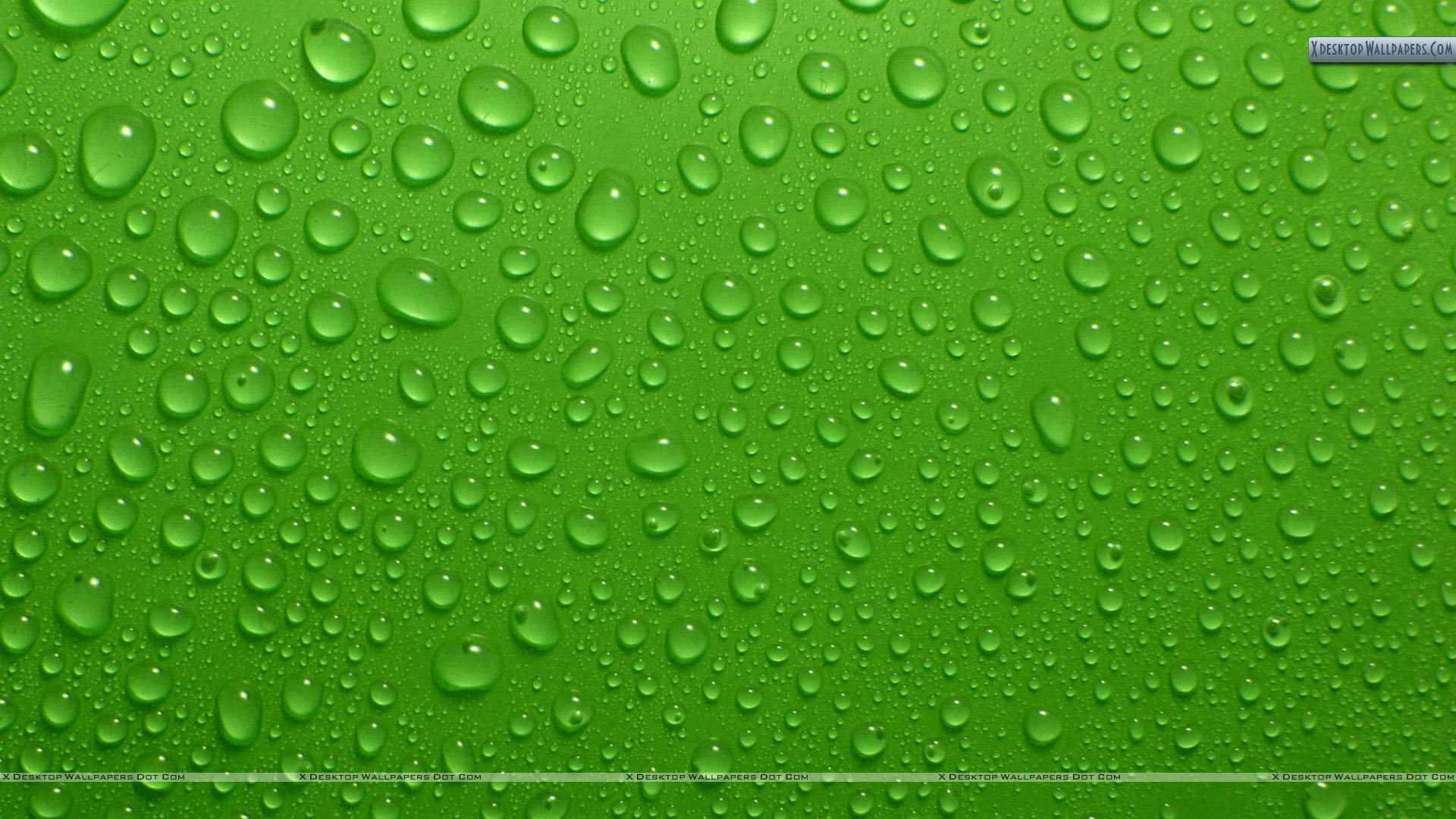 Drops On Green Background Wallpaper