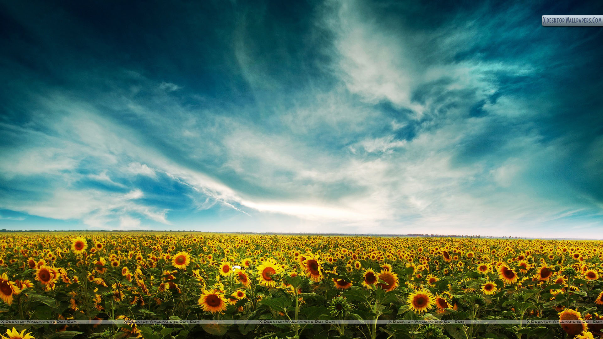 sunflowers landscape wallpaper