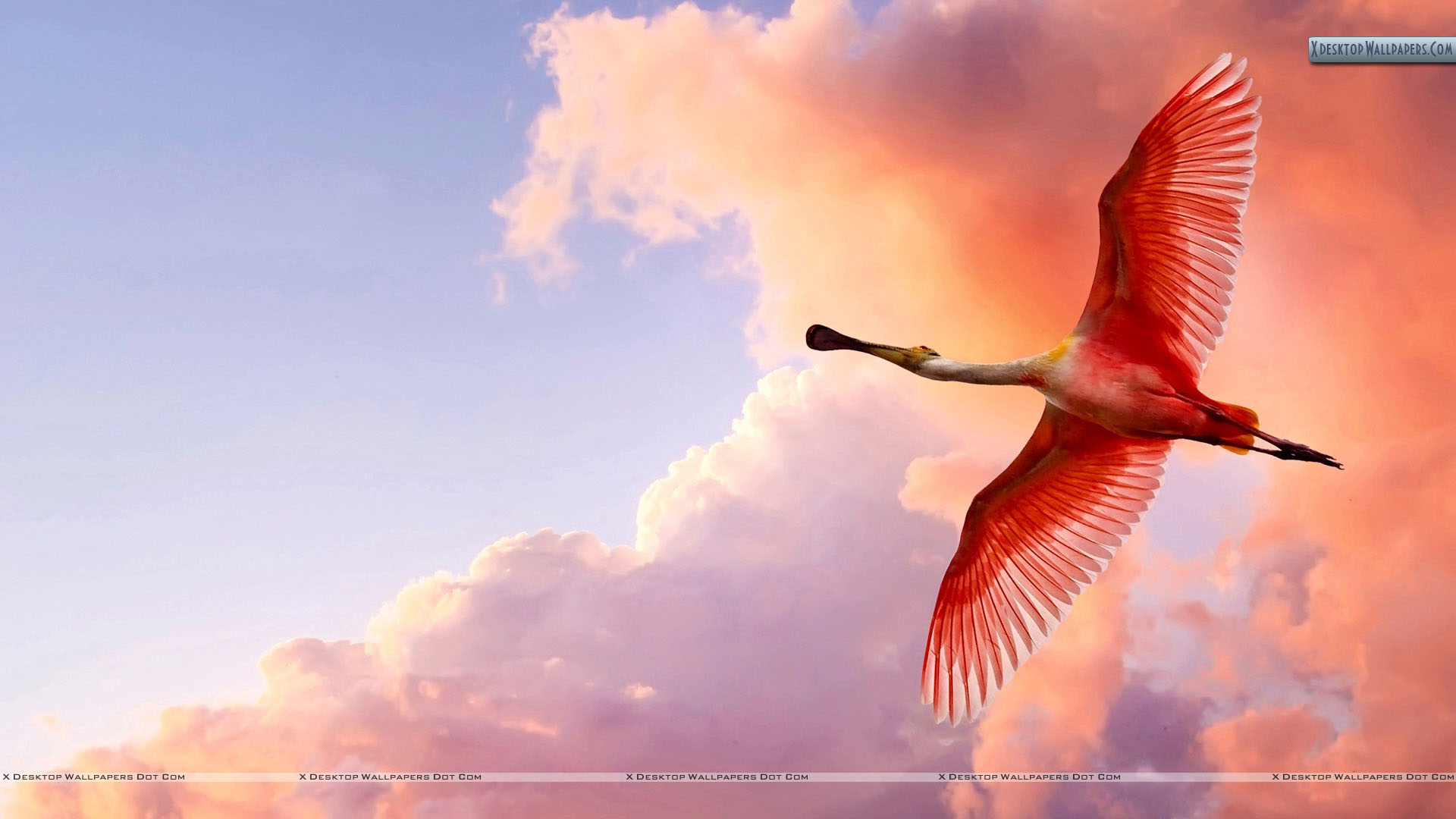 birds wallpapers, photos & images in hd