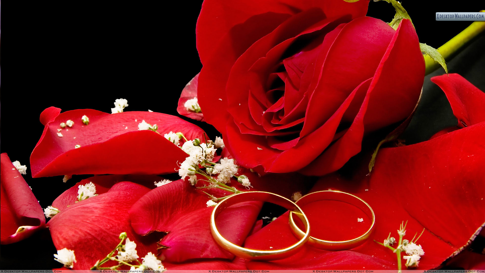 lying is free en wedding on gold red rose pixabay rings photo