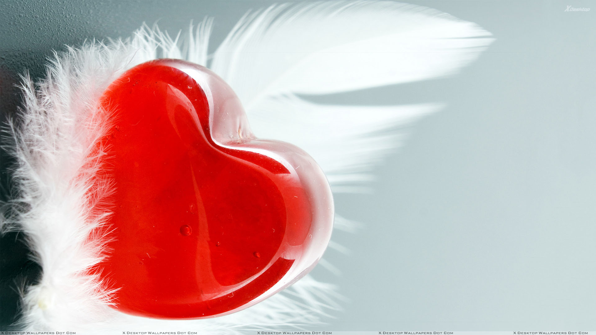 You Are Viewing Wallpaper Titled Feather And Red Heart