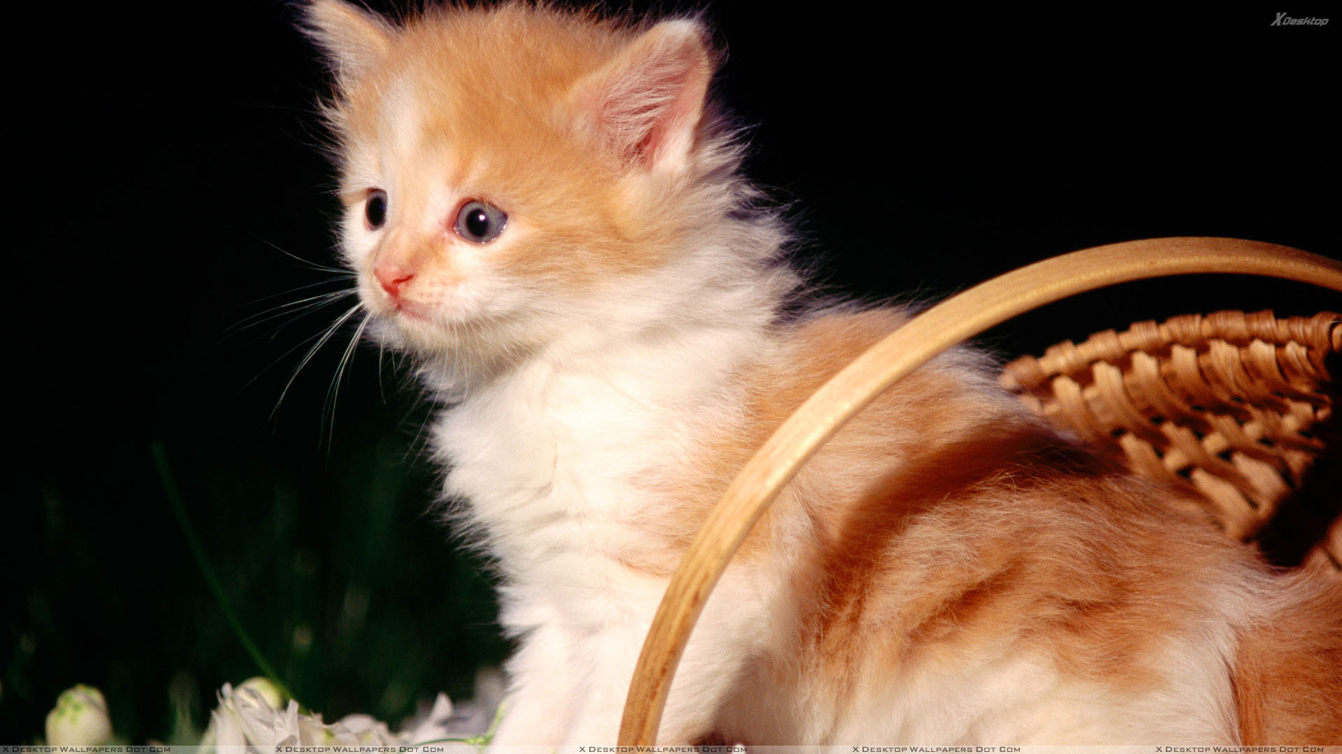 Sweet Small Cat Looking Innocent Wallpaper