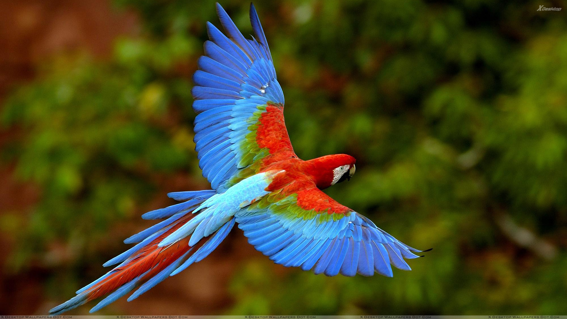 Blue Birds Wallpapers, Photos & Images in HD