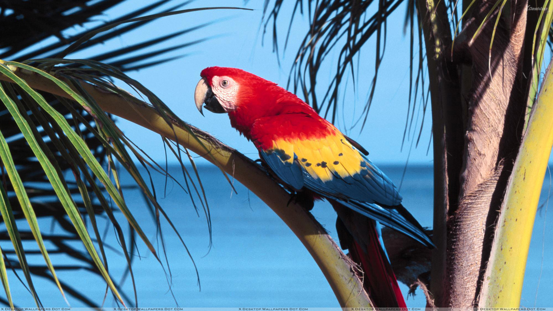 Colorful Bird Sitting On A Tree Wallpaper