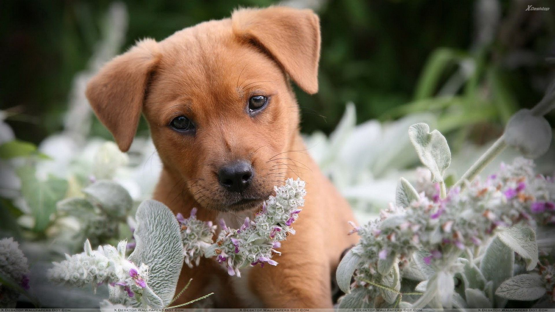 Brown%20Little%20Puppy%20In%20Flowers.jp