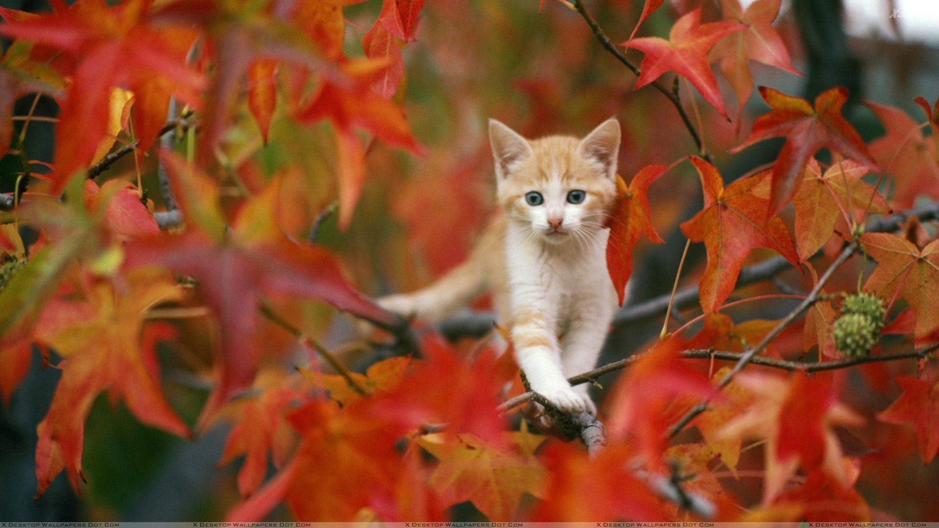 7 Pets Who Love Autumn