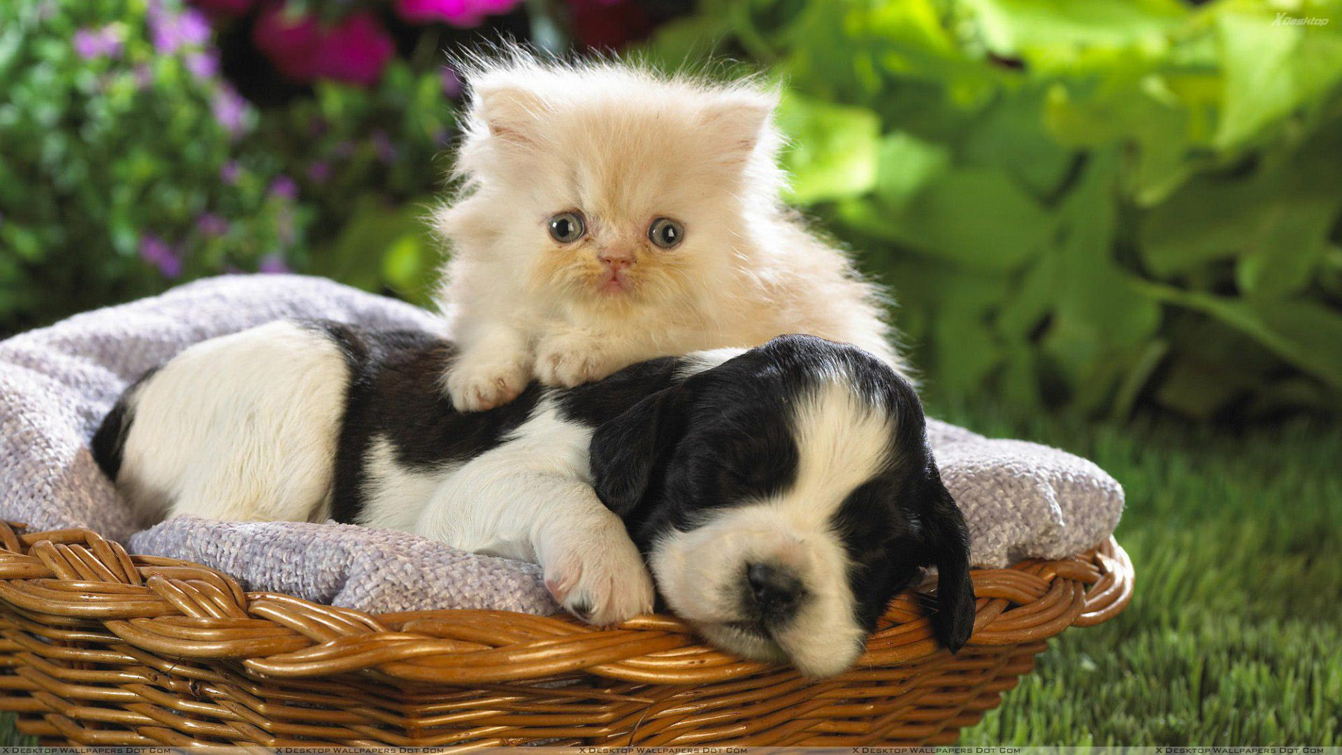 Cat With A Sleeping Dog Wallpaper