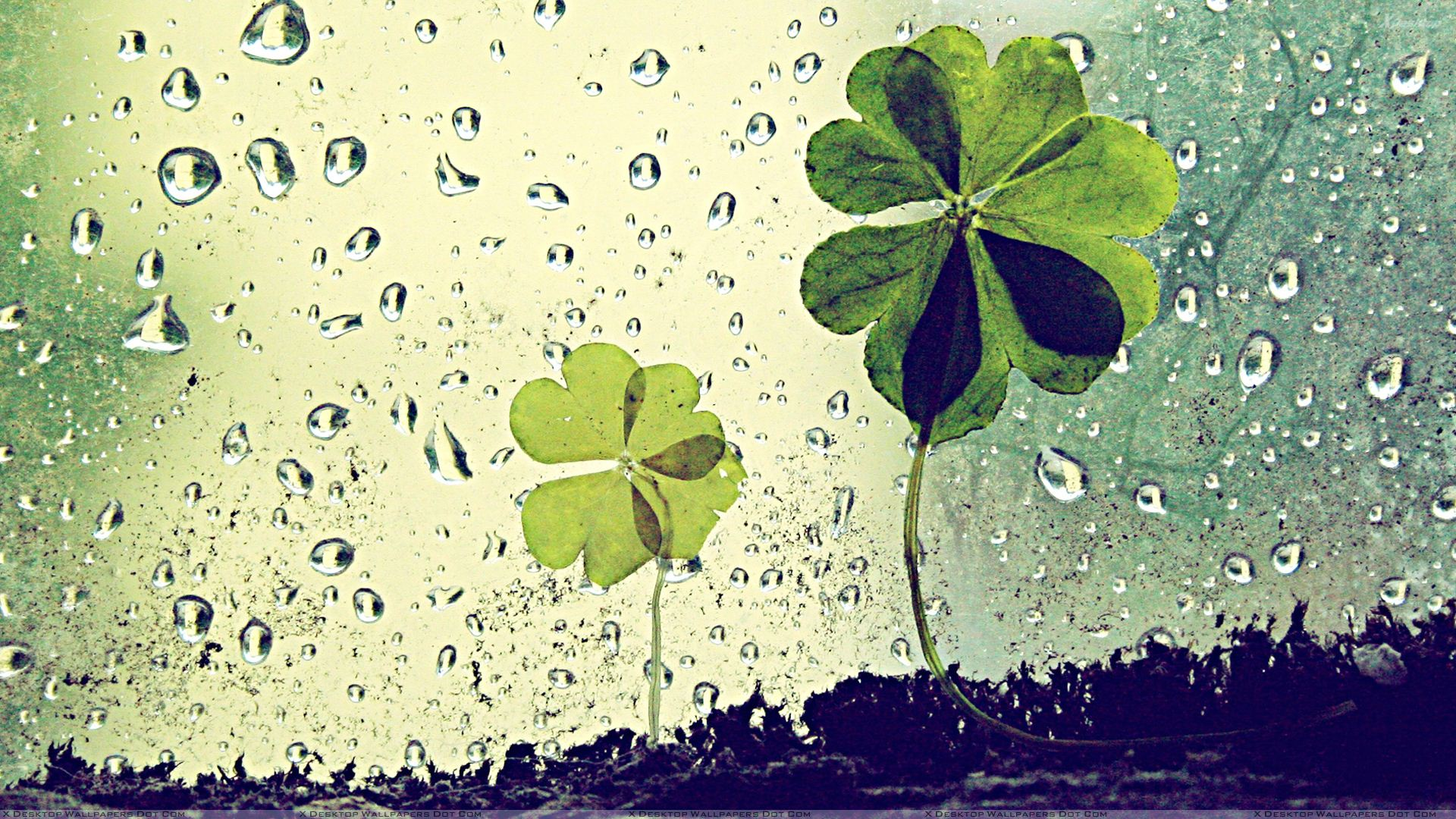 green artistic leaves and waterdrops wallpaper