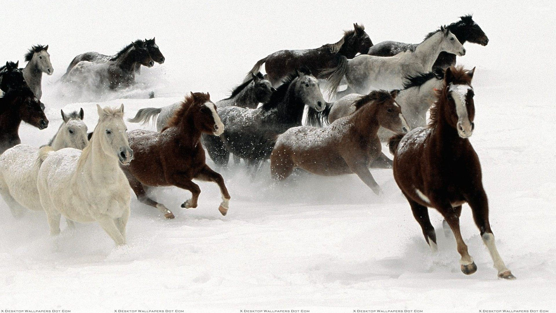 Horses Running And White Background Wallpaper