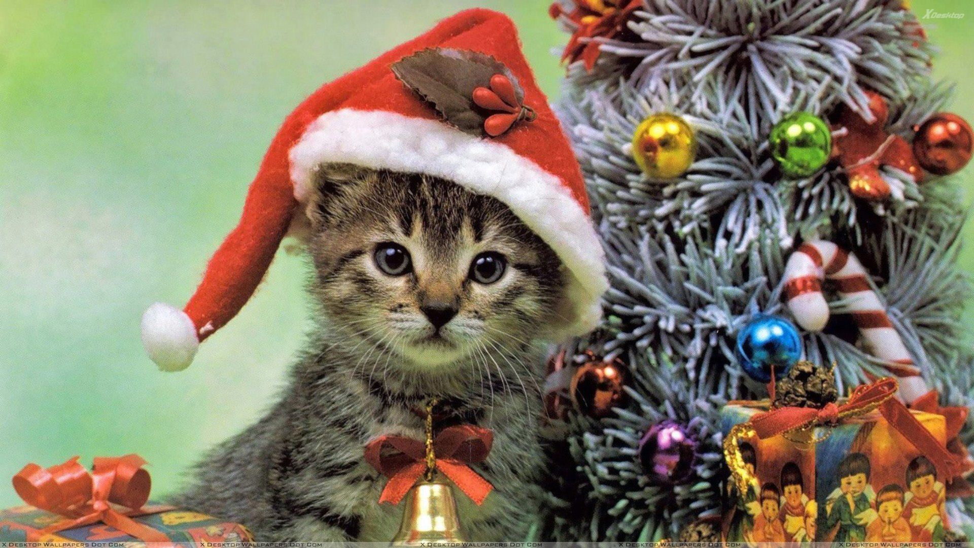 Christmas Eve Images.Little Cat On Christmas Eve Wallpaper