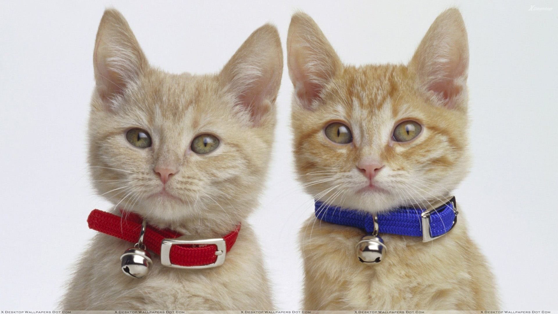 Cute Names For Twin Girl Cats