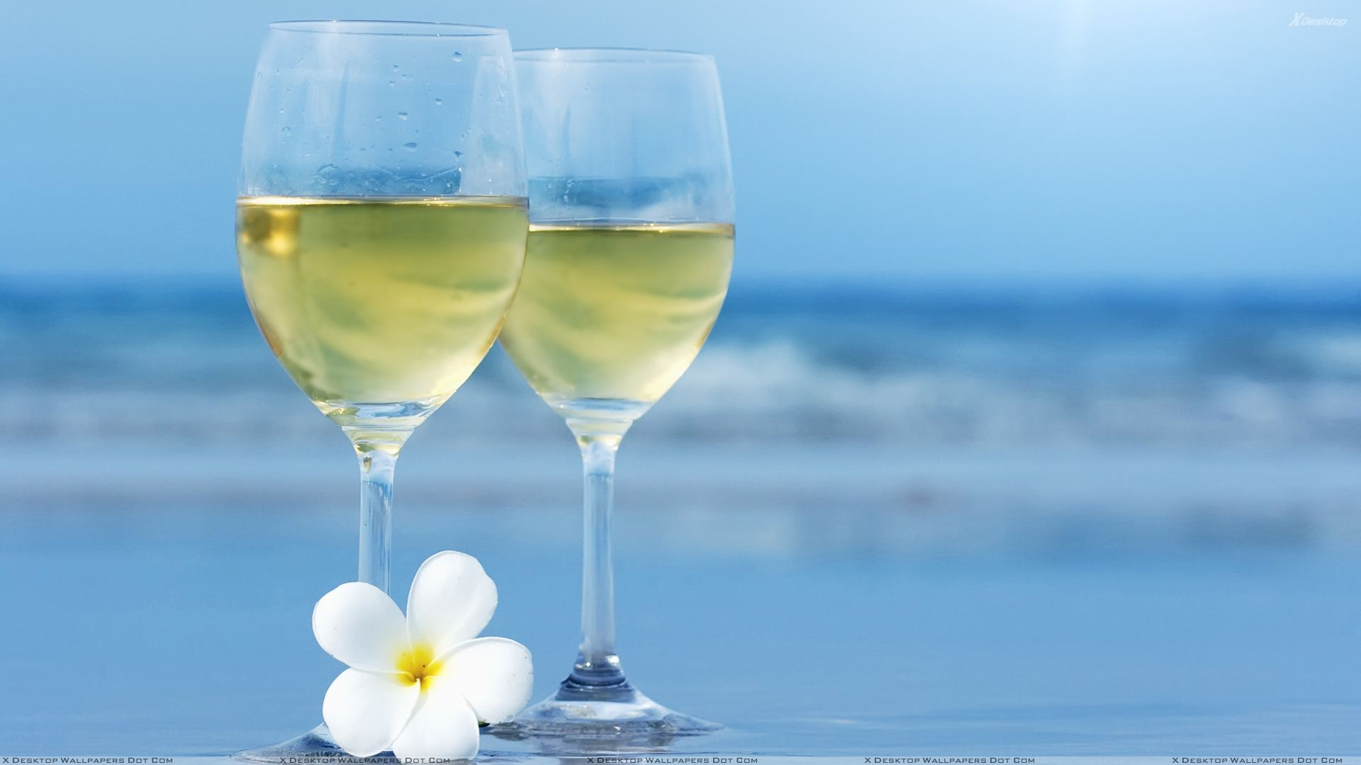 Wine Glasses With White Flower Closeup Near Sea Wallpaper