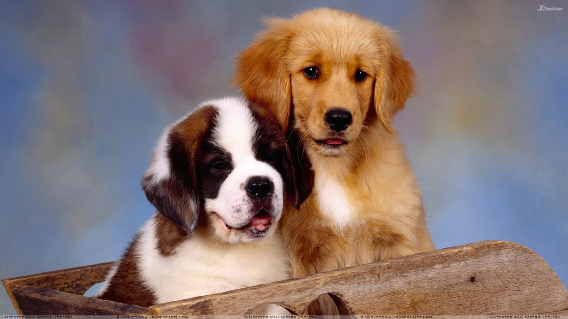 cute puppies hd wallpaper download
