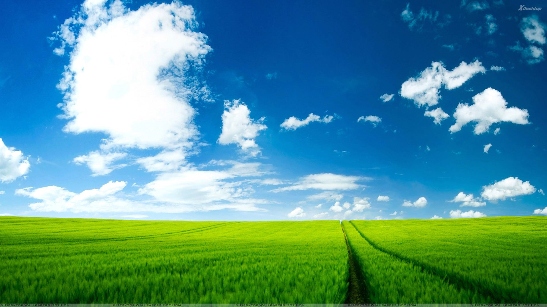 You Are Viewing Wallpaper Titled Summer Green Field Scenery