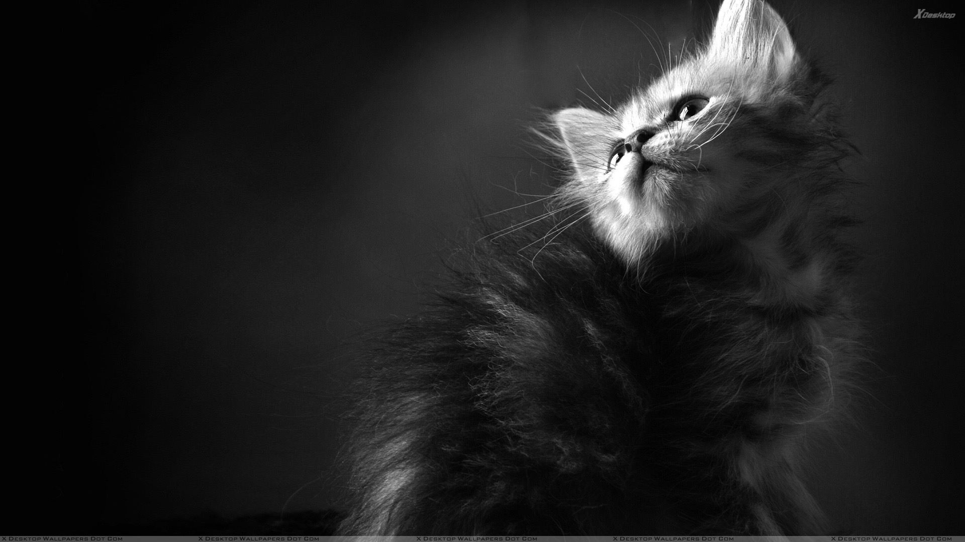 black n white cat looking up wallpaper