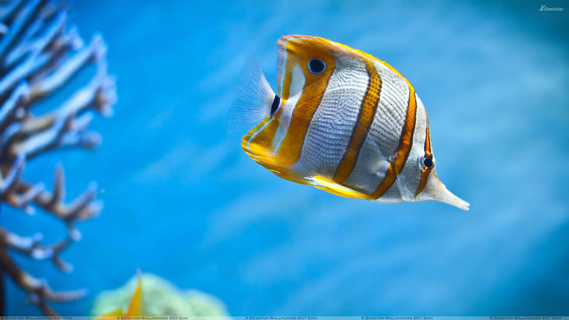 fish in blue water wallpaper