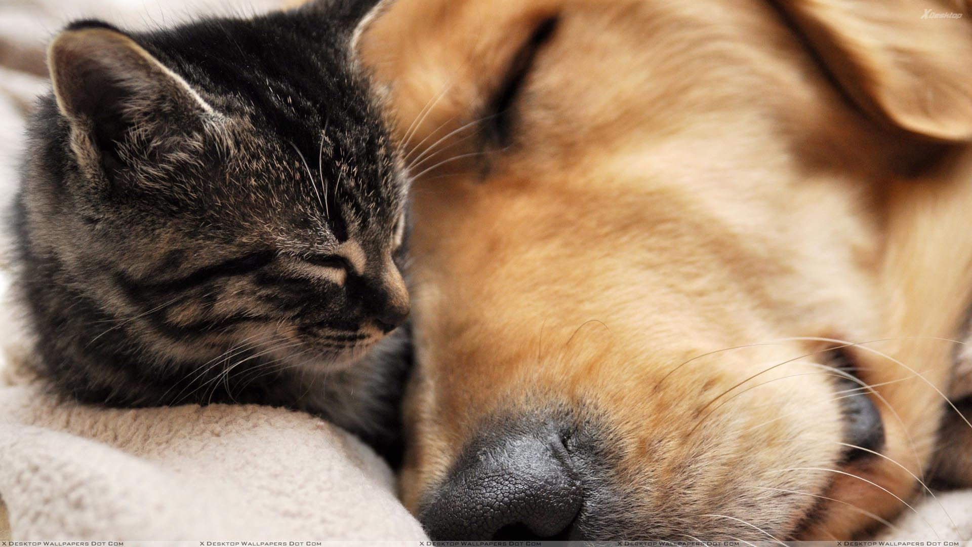 Dog Sleeping With Cat Download 30
