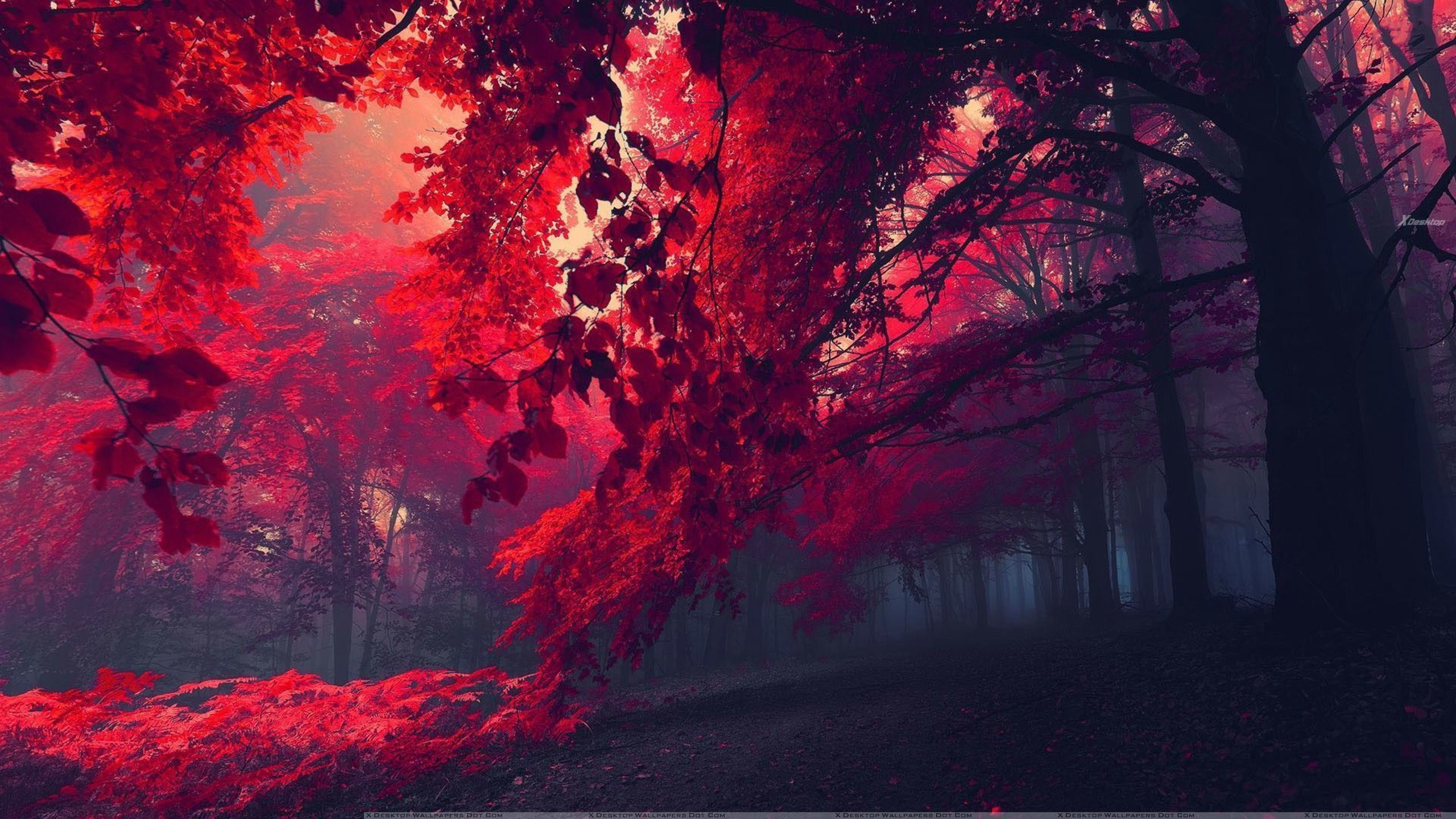 who wants to walk in this beautiful red forest wallpaper