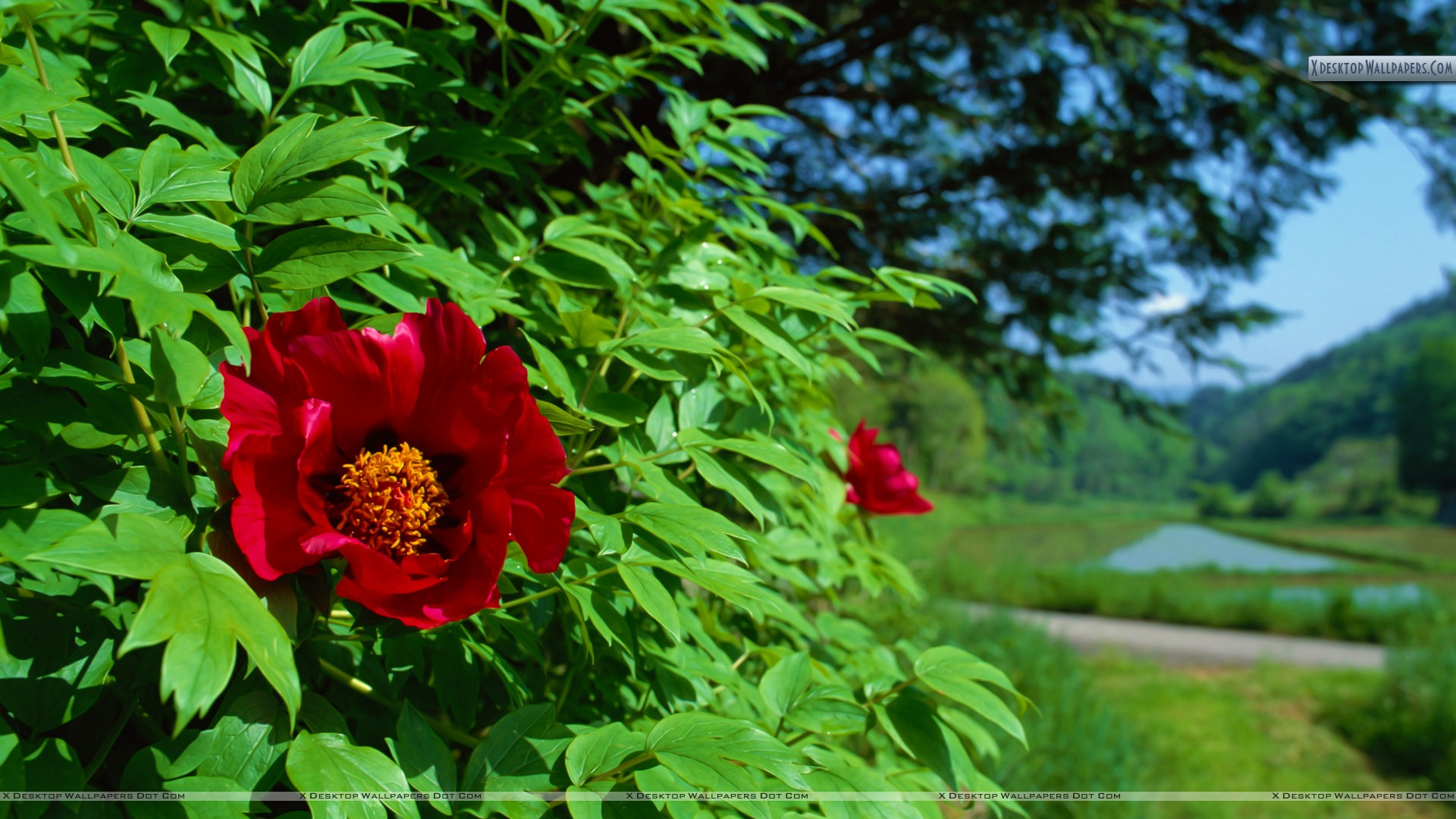 You Are Viewing Wallpaper Led Red Flower On A Green