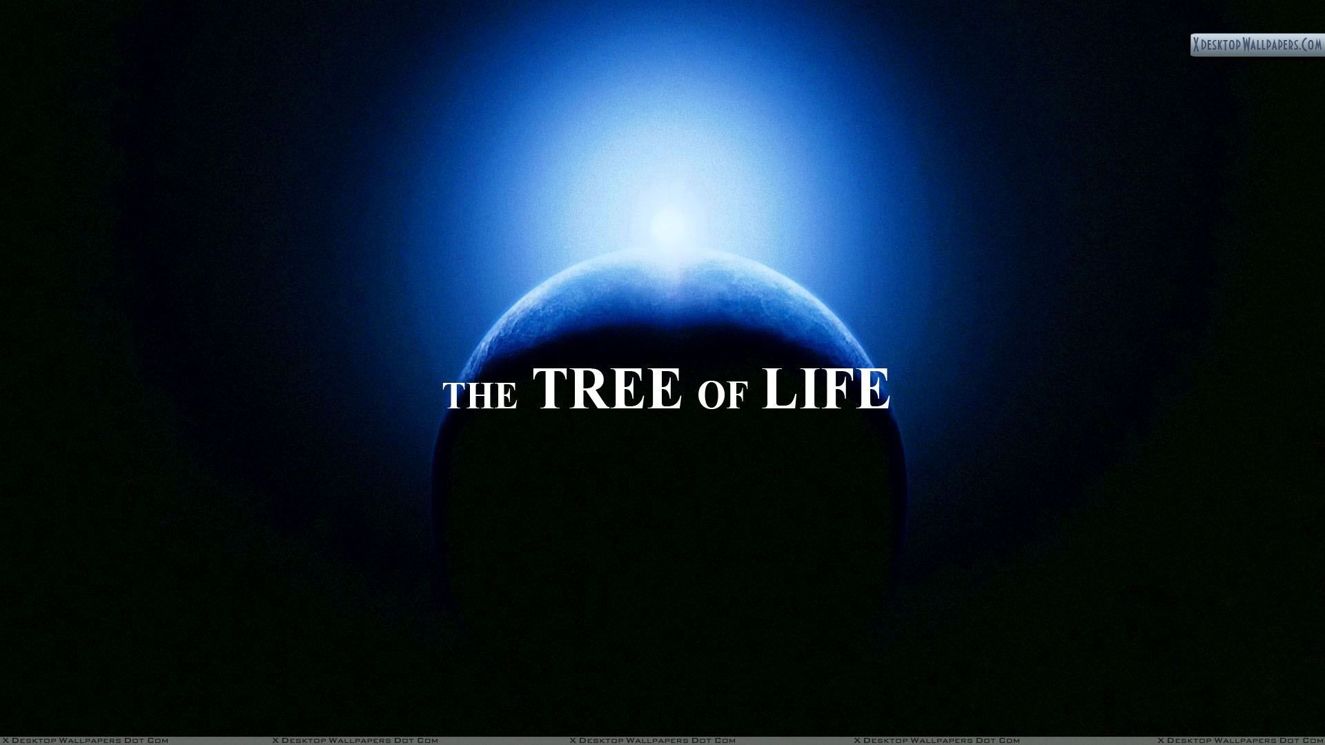 The Tree Of Life A Life Journey Wallpaper